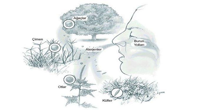 Alerjik rinit tedavisi. En etkili yöntemler